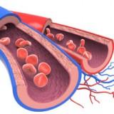 Trombofilia: congenita o acquisita, va tenuta sotto controllo